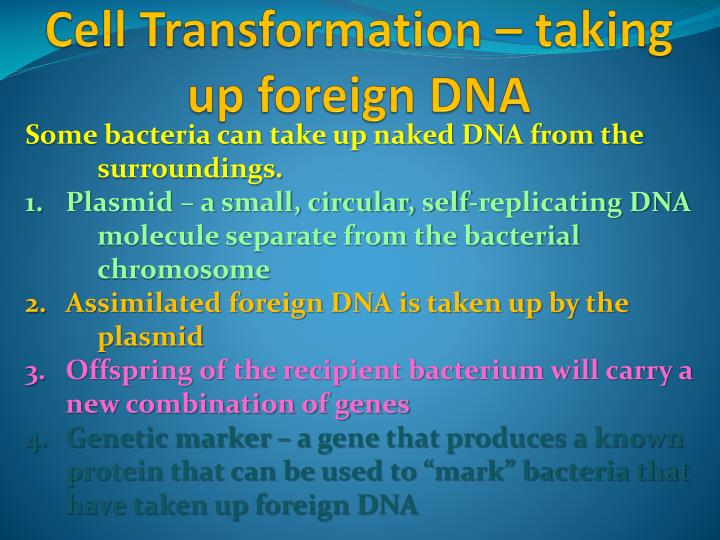 Cell Transformation – taking up foreign DNA