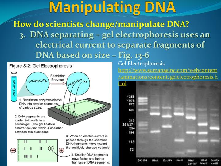 How do scientists change/manipulate DNA?
