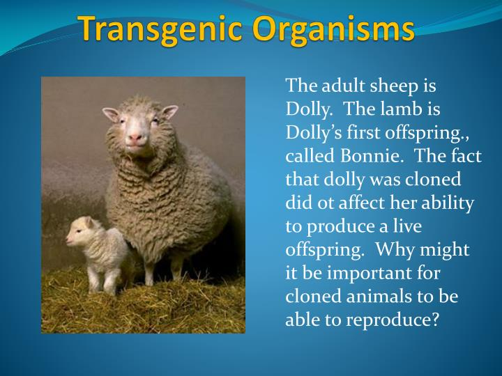 The adult sheep is Dolly.  The lamb is Dolly's first offspring., called Bonnie.  The fact that dolly was cloned did