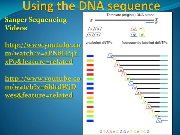 Sanger Sequencing Videos
