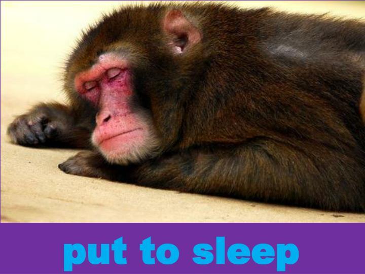 put to sleep