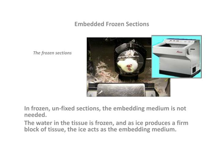 Embedded Frozen