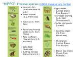 hippo invasive species usda invasive info center