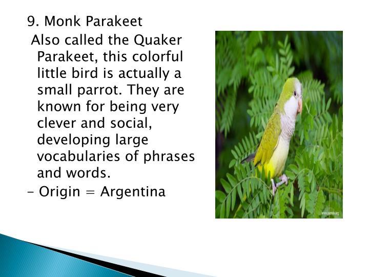 9. Monk Parakeet