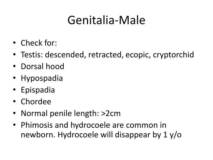 Genitalia-Male