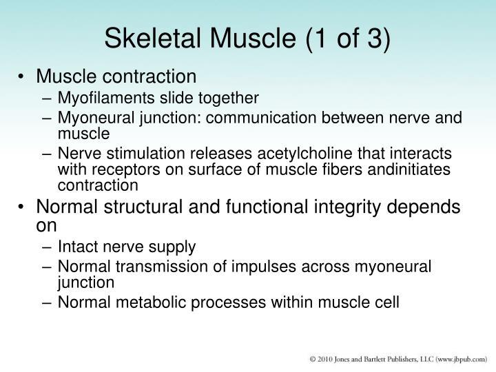 Skeletal Muscle (1 of 3)