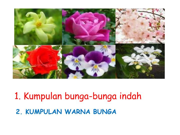 1. Kumpulan bunga-bunga