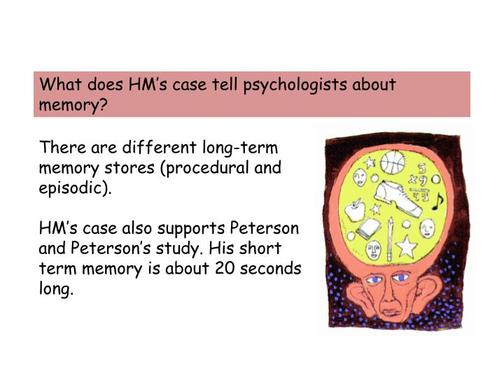 What does HM's case tell psychologists about memory?