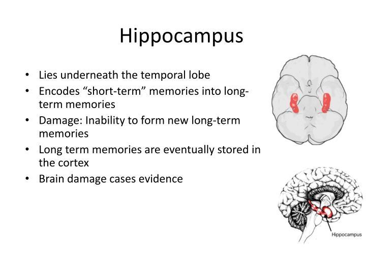 PPT - Brain Constituents PowerPoint Presentation - ID:2104790