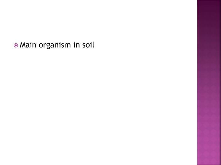 Main organism in soil