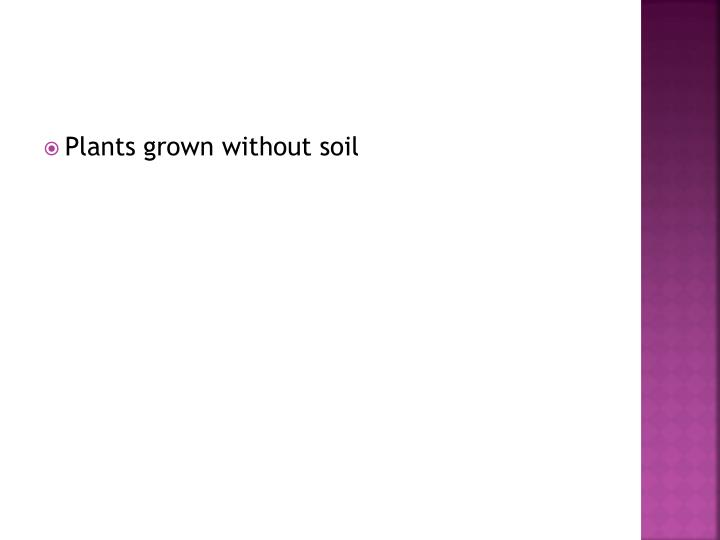 Plants grown without soil