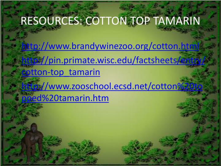 RESOURCES: COTTON TOP TAMARIN