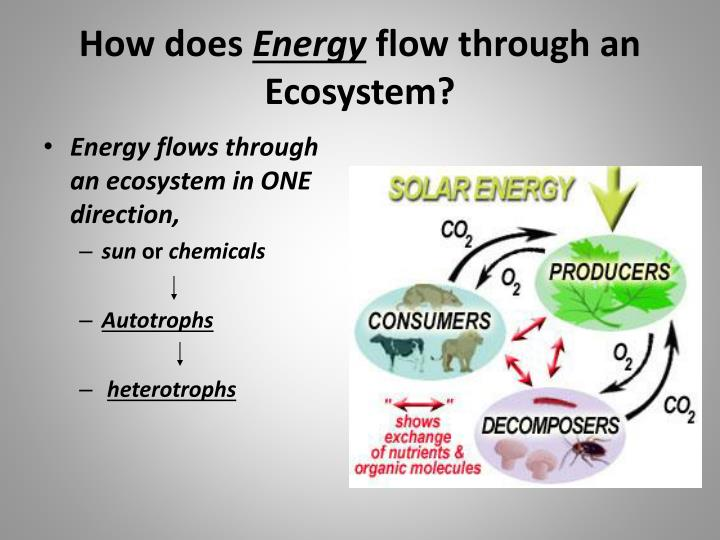 flow of energy through the ecosystem Table of contents1 functions of ecosystem2 energy flow through an ecosystem  in an aquatic ecosystem, grazing food chain is the major conduit for energy flow.
