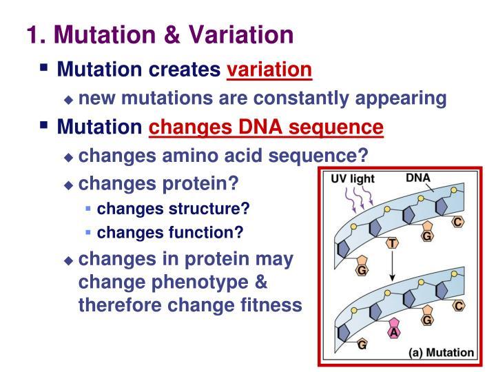 1. Mutation & Variation