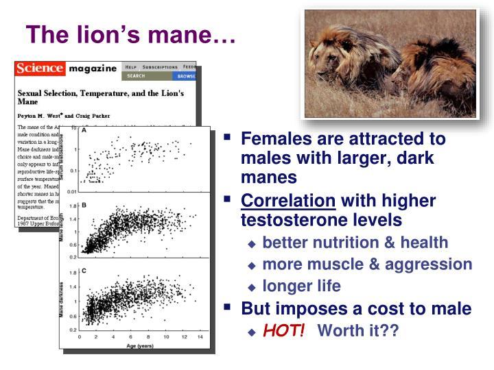The lion's mane…
