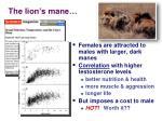 the lion s mane