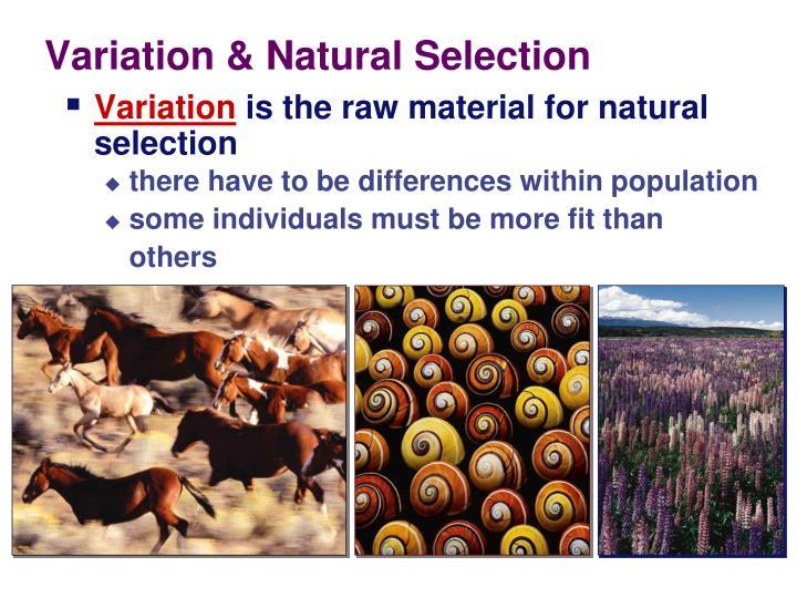 Variation &