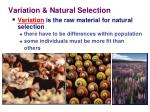 variation natural s election