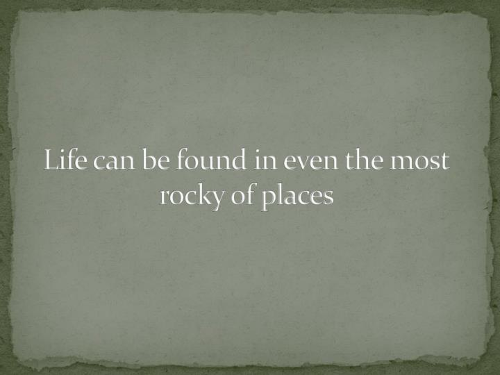 Life can be found in even the most rocky of places