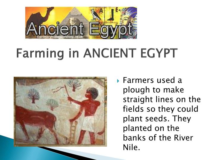Farming in ANCIENT EGYPT
