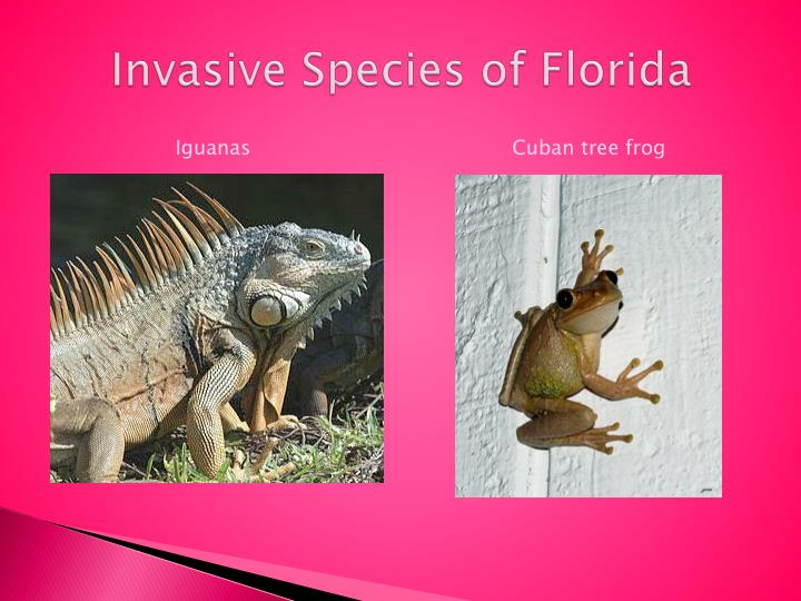 Ppt invasive exotic species powerpoint presentation id for Invasive fish in florida