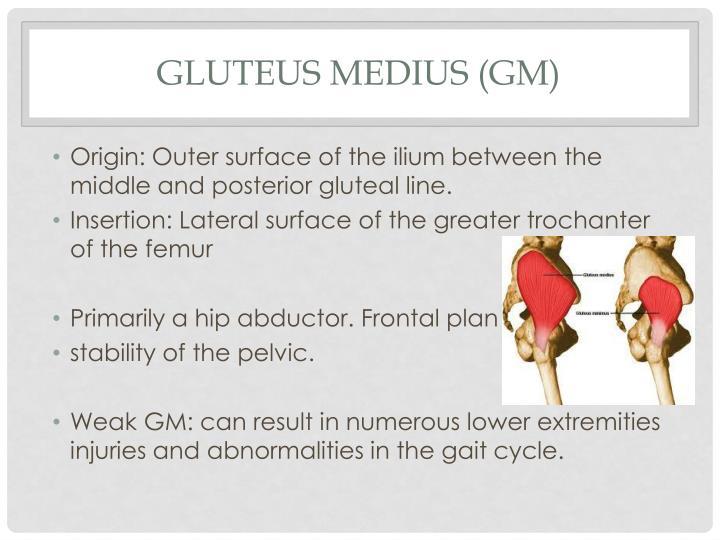 Gluteus