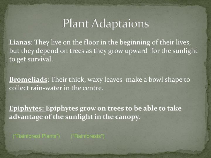 Plant Adaptaions