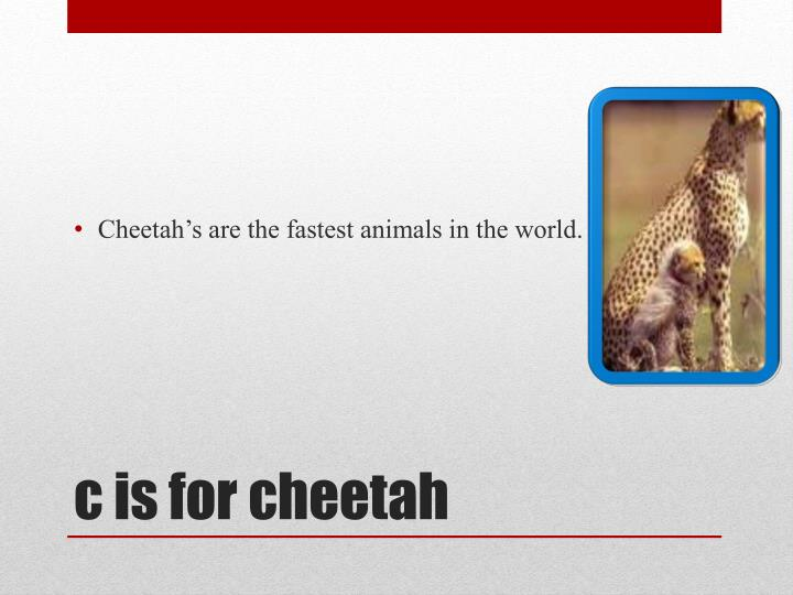 Cheetah's are the fastest animals in the world.