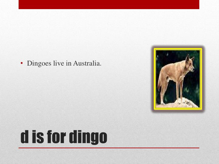 Dingoes live in Australia.