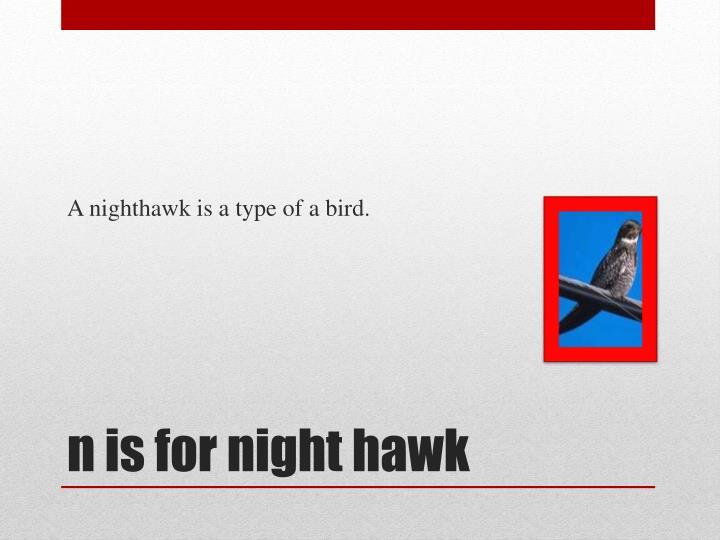 A nighthawk is a type of a bird.
