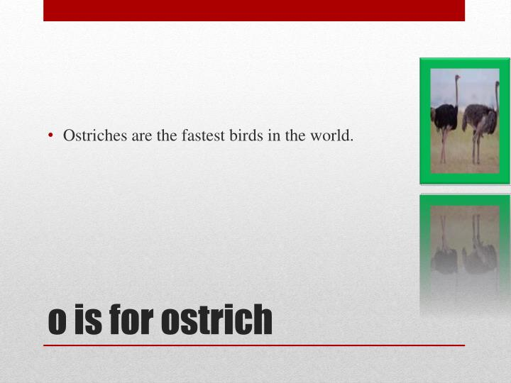 Ostriches are the fastest birds in the world.