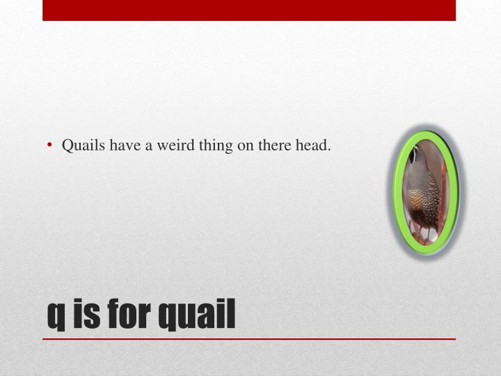 Quails have a weird thing on there head.