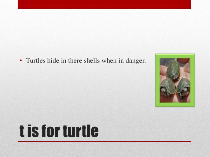 Turtles hide in there shells when in danger.
