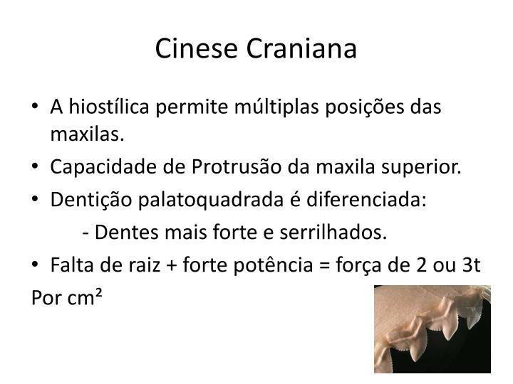 Cinese Craniana