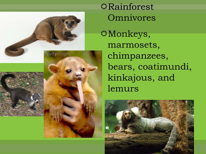 Rainforest Omnivores