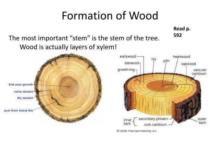 Formation of Wood
