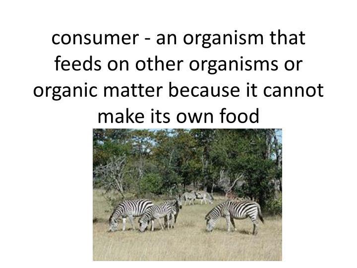 consumer - an