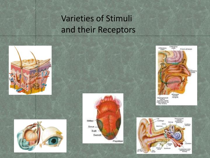 Varieties of Stimuli and their Receptors