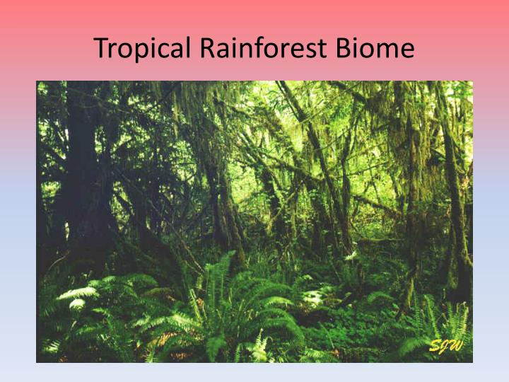 tropical rainforest biomes essay