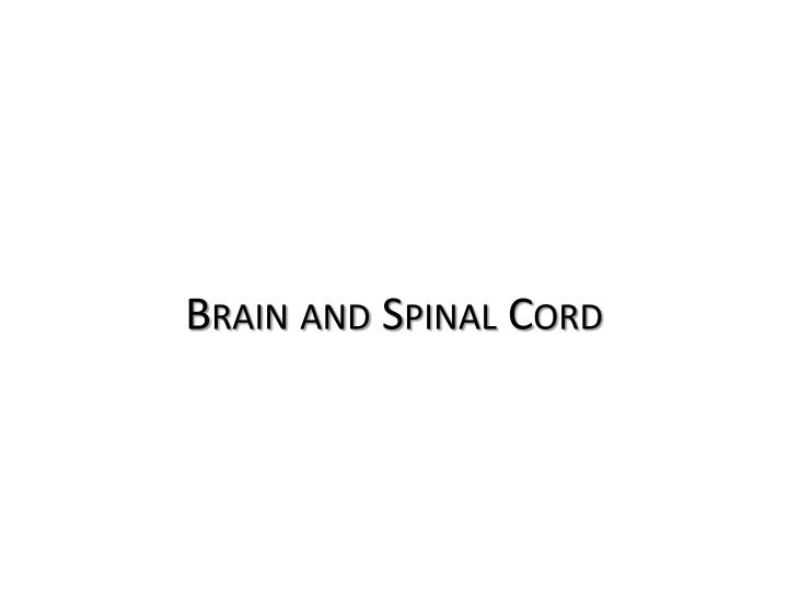 Brain and Spinal Cord