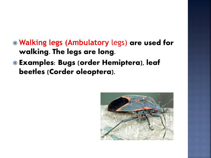Walking legs (Ambulatory