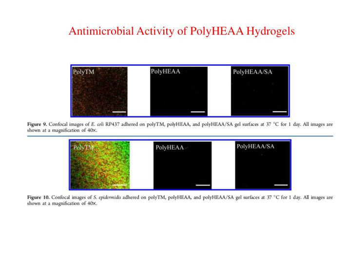 Antimicrobial Activity of PolyHEAA Hydrogels
