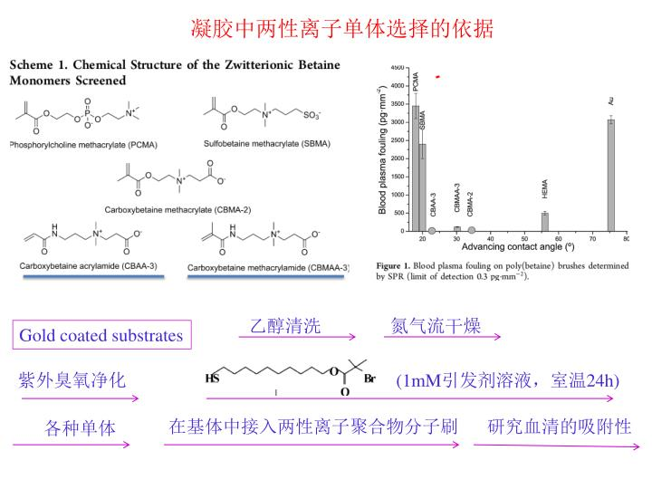 凝胶中两性离子单体选择的依据