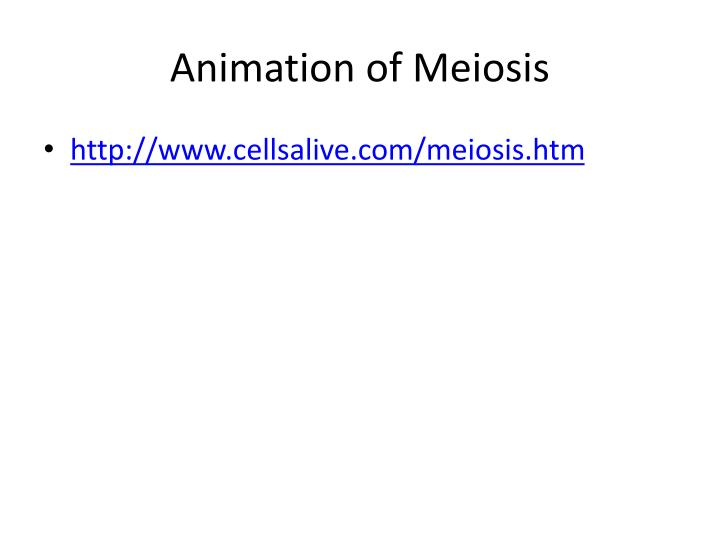 Animation of Meiosis