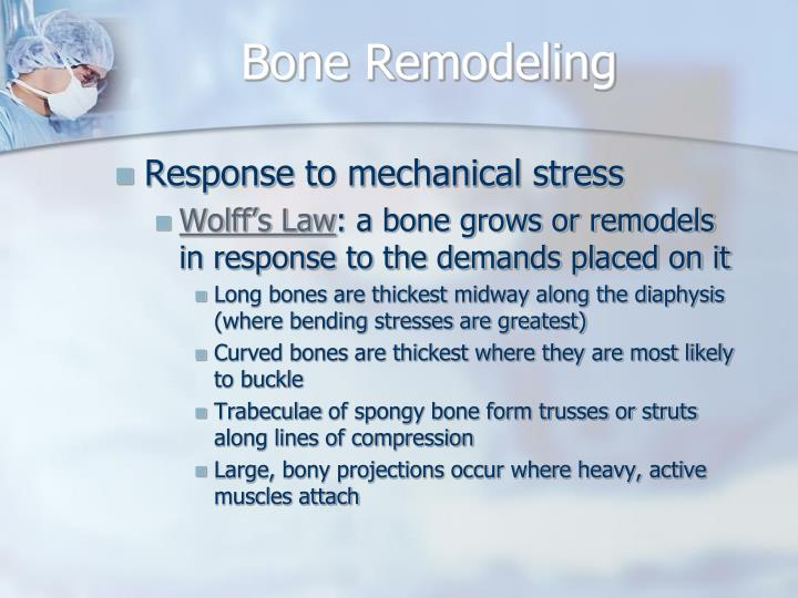 Bone Remodeling
