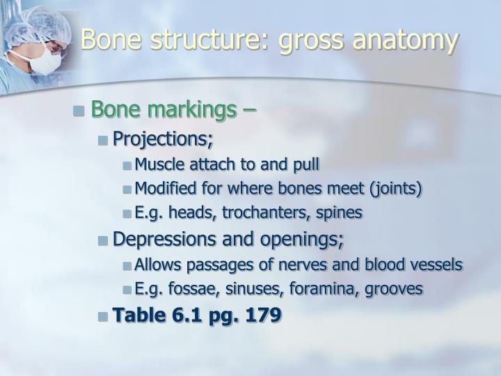 Bone structure: gross anatomy