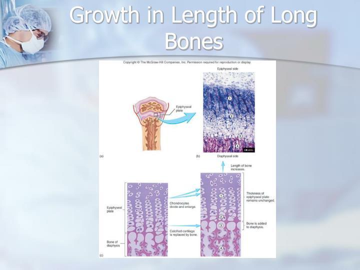 Growth in Length of Long Bones