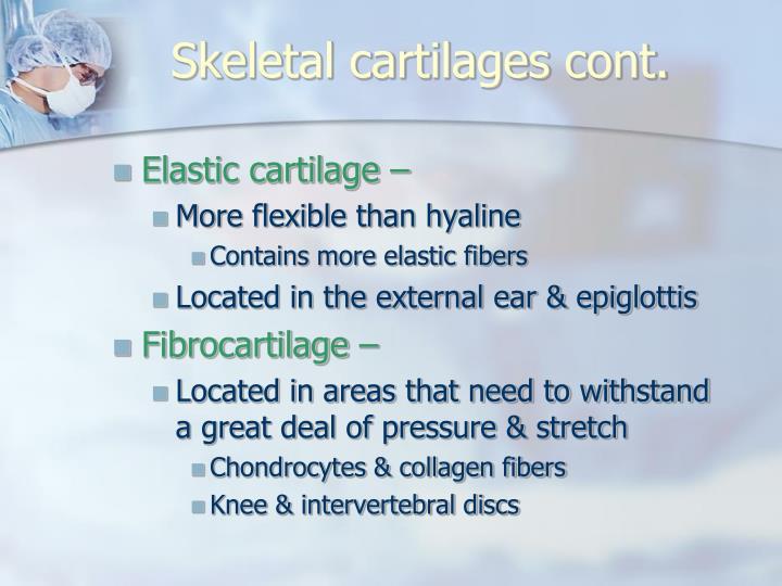 Skeletal cartilages cont.