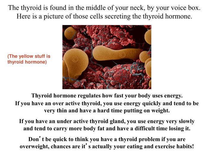 The thyroid is found in the middle of your neck, by your voice box.  Here is a picture of those cells secreting the thyroid hormone.
