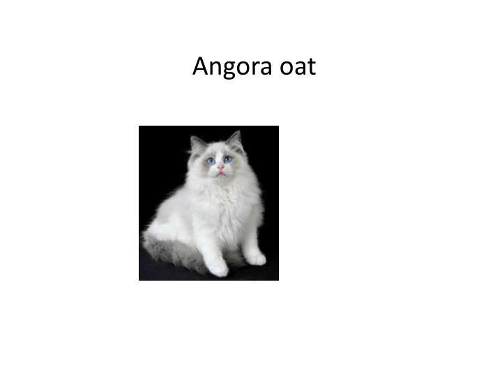 Angora oat